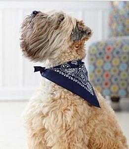 doggie-skins-bandanas